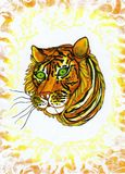 tigerella Στοκ εικόνα με δικαίωμα ελεύθερης χρήσης