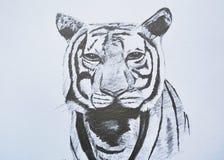 Tigergesichts-Porträtbleistift-zeichnung auf Papier Stockfotos