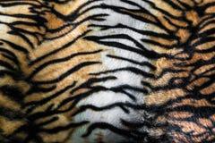Tigerhud eller backg för closeup för modell för band för tigerlädertextur Arkivfoto