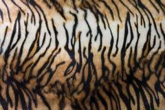 Tigerhud eller backg för closeup för modell för band för tigerlädertextur Arkivbild
