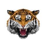 Tigerhuvudet skissar vektorn royaltyfri illustrationer