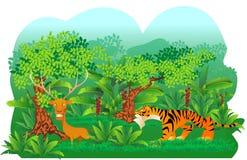 Tigerjakt en hjort Arkivfoton