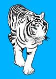Tigerkort Arkivfoto