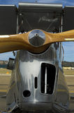 Tigermoth Stock Photography
