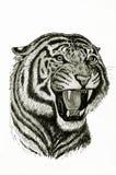 Tigern vrålar stock illustrationer
