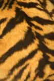 Tigerpelzbeschaffenheit (real) Lizenzfreies Stockbild