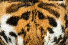 Tigerpelzbeschaffenheit (real) Lizenzfreies Stockfoto