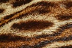Tigerpälsbakgrund Arkivbilder