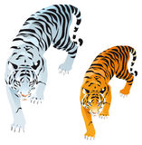 Tigers. White and orange, vector image, software: Illustrator Stock Images