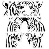 Tigers eye silhouette, vector Stock Photos