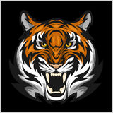Tigers Face. Vector illustration of a tiger head. Stock Image