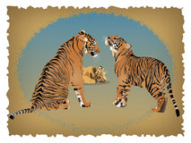 Tigers Stock Image