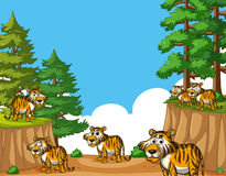 Tigers on mountain at daytime Stock Photos