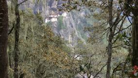 Tigers nest Royalty Free Stock Image