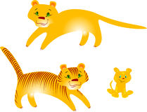 Tigers and puma Stock Photography