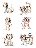 Tigers in six different positions Royalty Free Stock Image