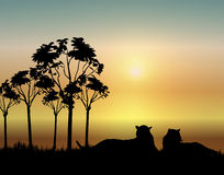 Tigers at Sunrise. Illustration of two tigers resting at sunrise Royalty Free Stock Photography