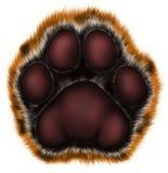 Tigertatze auf weißem Hintergrund Stockbilder