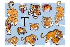 Tigeruppsättning som isoleras på vit bakgrund, färgillustration stock illustrationer