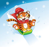 TigerWinterSledding Royalty Free Stock Photos