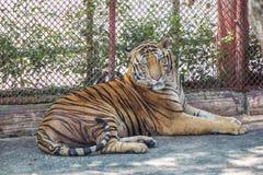 Tigerzoo Stockfotos