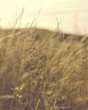 Tiges brumeuses Photographie stock libre de droits