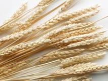 Tiges de blé Photographie stock libre de droits