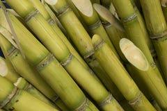 Tiges de canne à sucre Photo libre de droits
