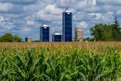 Tiges de maïs, et silos Photo stock