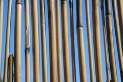 Tiges en bambou Photographie stock