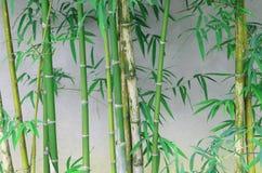 Tiges en bambou vertes dans la forêt en bambou Photos libres de droits