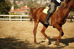 Tight close-up image of horse and rider Royalty Free Stock Images