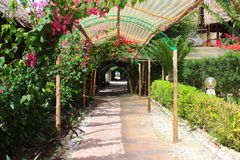 Tight green passage between the overgrown plants and flowers. View down the narrow alley partly shaded by overgrown blooming bougainvillea in Zanzibar Africa Royalty Free Stock Photo