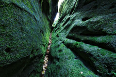 Tight ravine. Small ravine of green mossy sandstone rocks in Saxony, Germany Royalty Free Stock Images