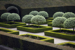 Tightly clipped shrubs in french garden Royalty Free Stock Images