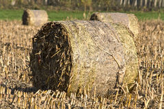 Tightly packed roll of hay Stock Photography