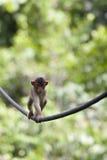 tightrope Royaltyfri Bild