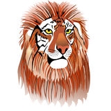 Tigon Royalty Free Stock Image