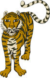 Tigr (Vector). Vector illustration of standing tiger Stock Photos