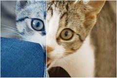 Tigre 2 Photographie stock