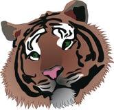 Tigre royalty illustrazione gratis