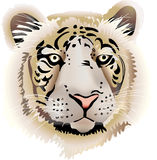 Tigre Illustrazione di Stock