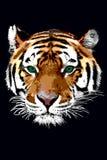 Tigre illustrazione di stock