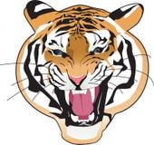 Tigre Imagens de Stock Royalty Free