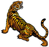 Tigre libre illustration