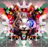 Tigre Imagenes de archivo