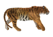 Tigre Photographie stock libre de droits