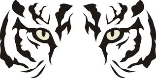 Tigre Fotos de archivo libres de regalías