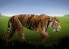 Tigre alaranjado ilustração do vetor