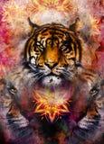 Tigre apacible del retrato en fondo ornamental Imagen de archivo